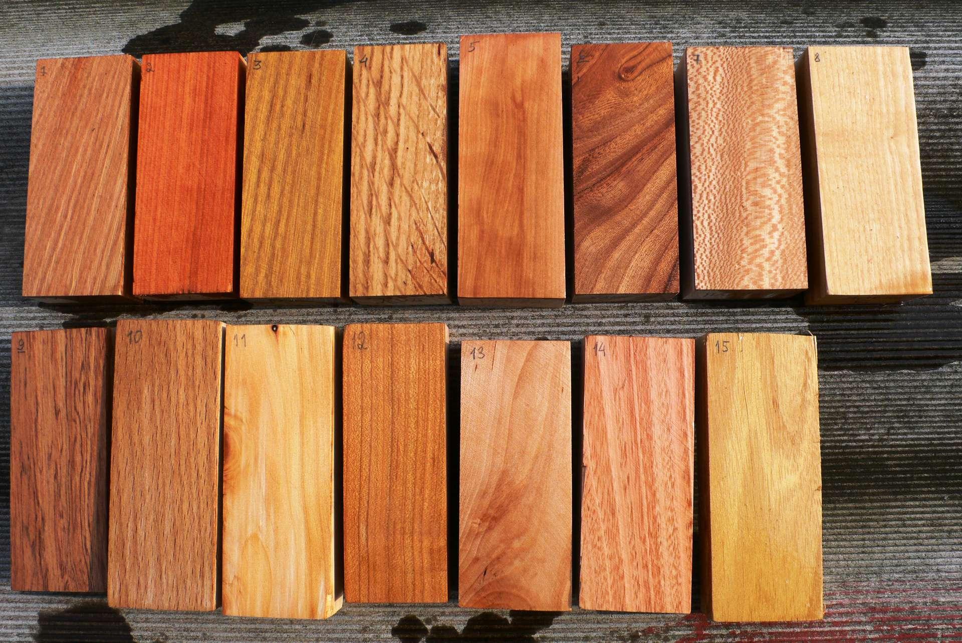 Ценные породы дерева
